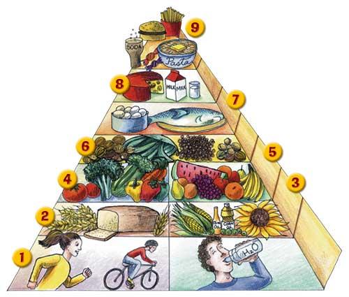 Diet & Pemakanan